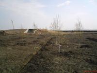 Озеленение парковой зоны